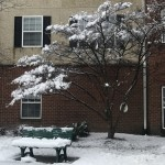 This is the park bench we all cannot wait to sit on once the weather warms up!