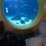 Under the Sea - loved the sea life!
